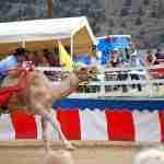 camel-ostrich-races
