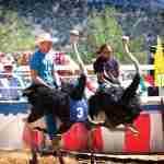 ostrich-camel-races